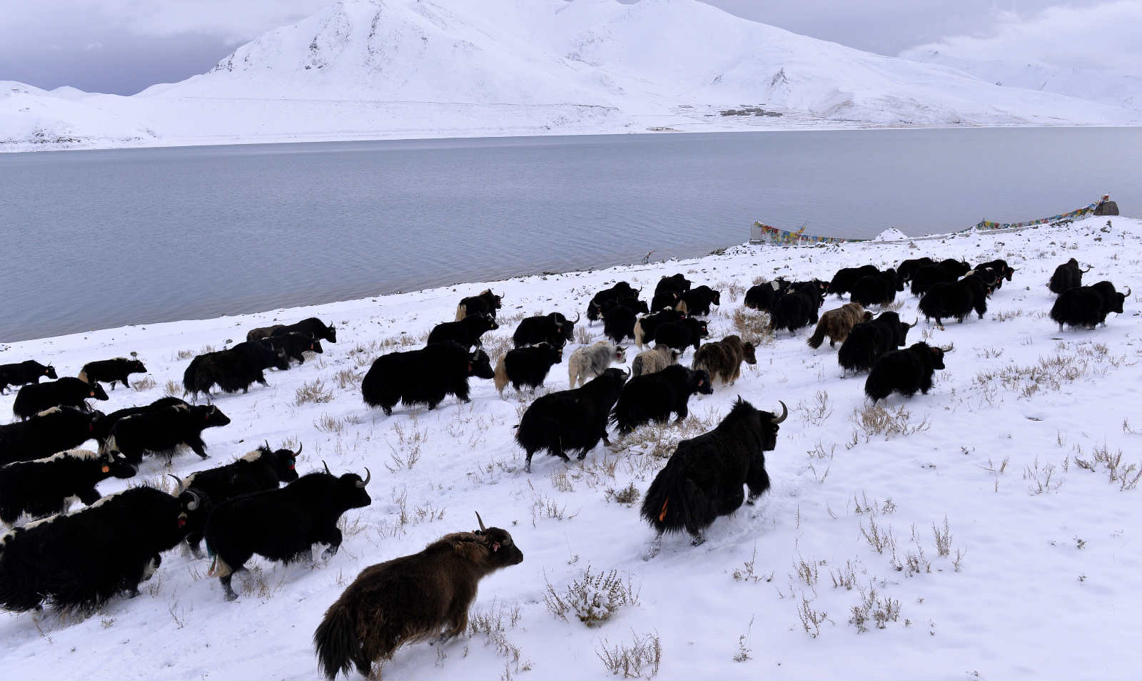 Tibetan plateau as clean as North Pole despite environmental woes